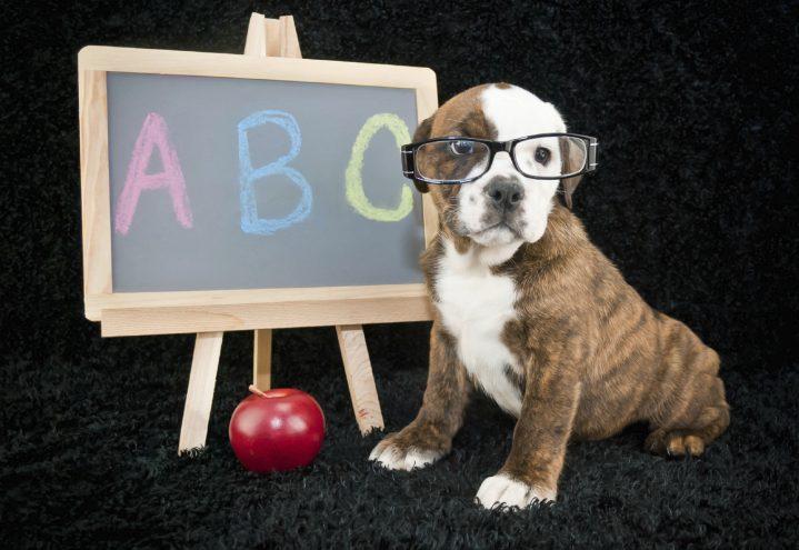 Grunnferdigheter – hundens ABC