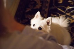 Hunder som maser