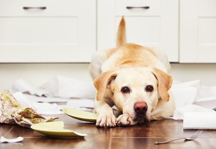 Atferdsproblemer – er det hundeeierens skyld?