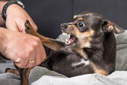 Avlivning av hunder med atferdsproblemer