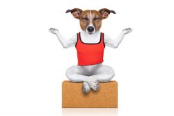 Doggie-Zen: Mindfulness for hunder